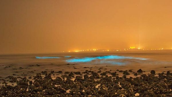 bioluminescence phenomenon at juhu beach