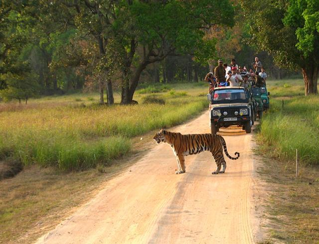 Kanha-National-Park-Kanha