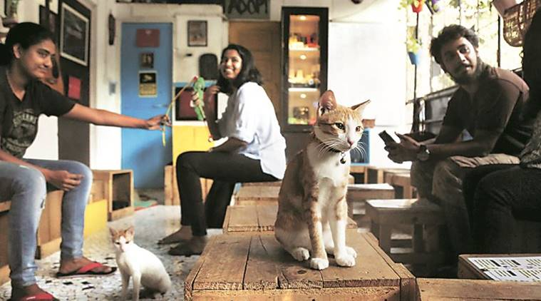 cat cafe studio mumbai