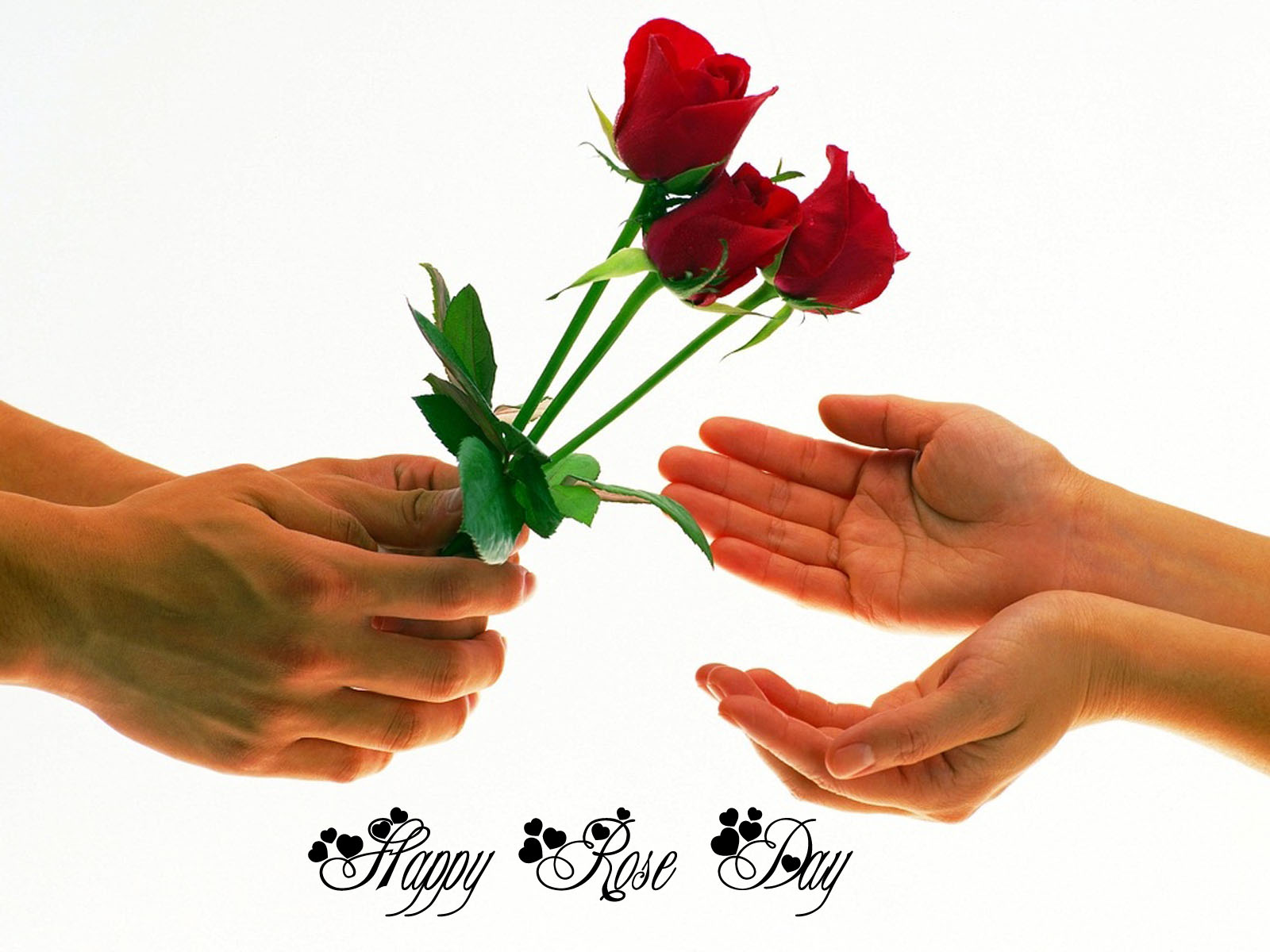 Happy Rose Day Wallpapers HD