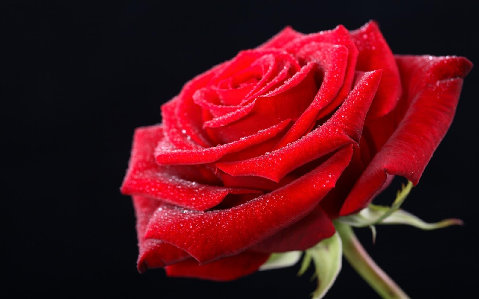 happy rose day images, pictures & wallpapers in hd - dontgetserious