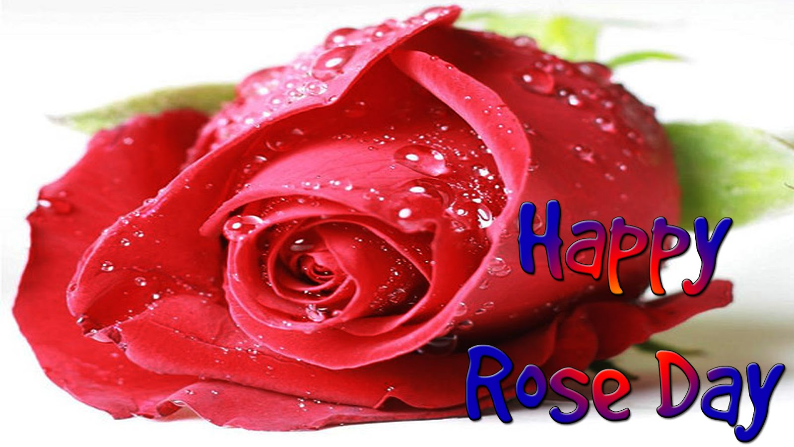 photos of rose day
