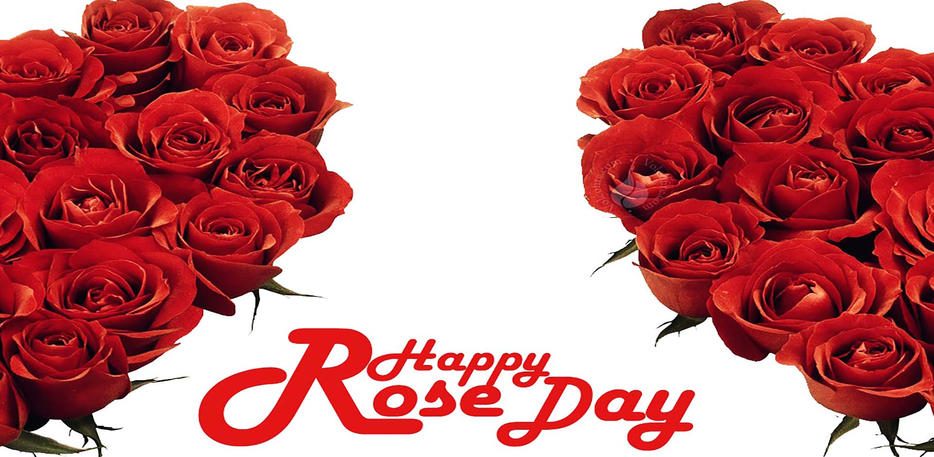 rose-day-beautiful-red-flowers