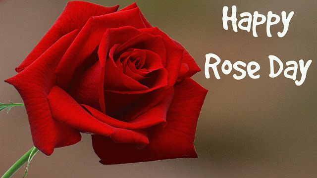rose day wallpapers for free