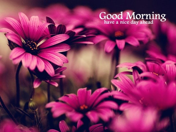 Good Morning Images Wallpapers Pictures Hd