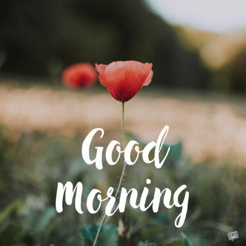 good morning image wish