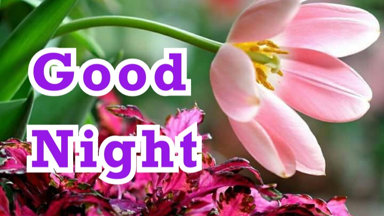 good night pics wallpapers images