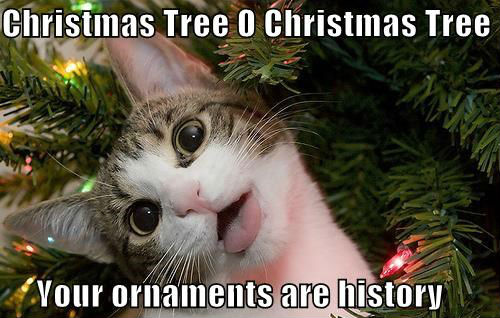 christmas tree cat meme