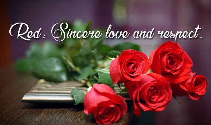 rose day whatsapp video status download
