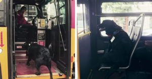 Dog Takes A Bus Ride All Alone Every Single Day, Just To Go To The Park