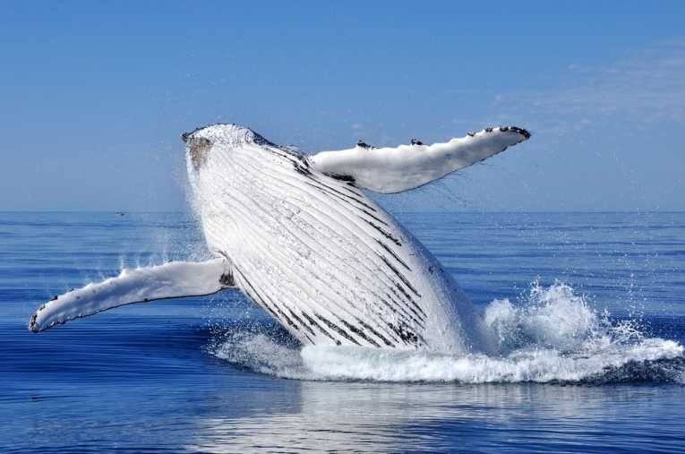 Humpback Fins facts about how deep is the ocean