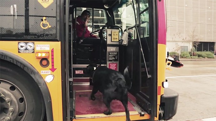 dog travels to park everyday in bus alone