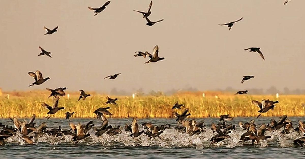 Vadhwana Bird Sanctuary