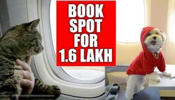 Private Jet To Fly Pets From Delhi To Mumbai Hired For Rs 9.06 LakhPrivate Jet To Fly Pets From Delhi To Mumbai Hired For Rs 9.06 Lakh