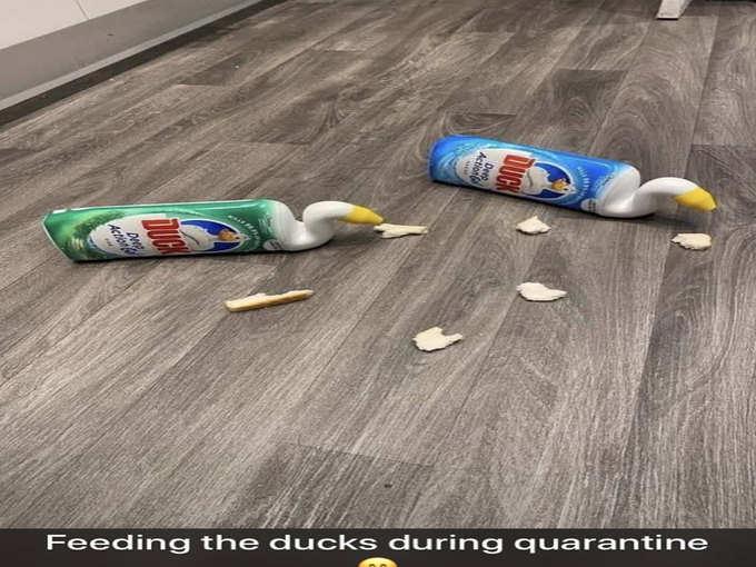Quarantine Memes save