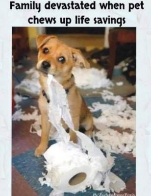 covid Quarantine tissue paper Memes