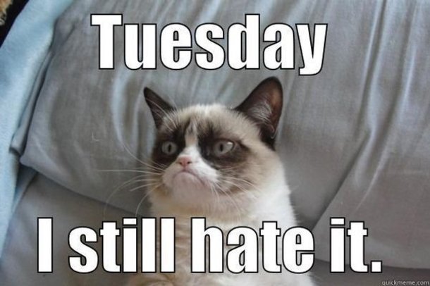 50+ Hilarious Happy Tuesday Memes for Everyone to Share