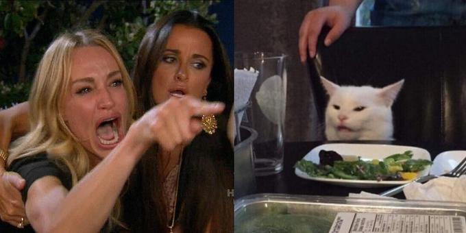 Woman Yells at Confused Cat