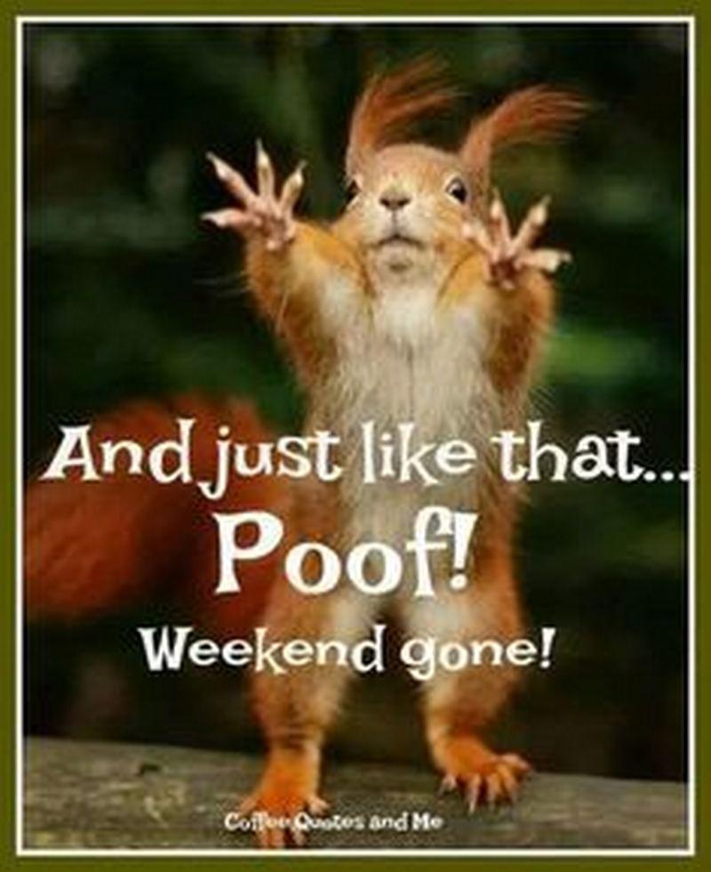 weekend memes 1