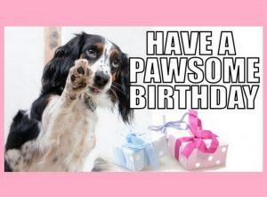 happy birthday dog memes