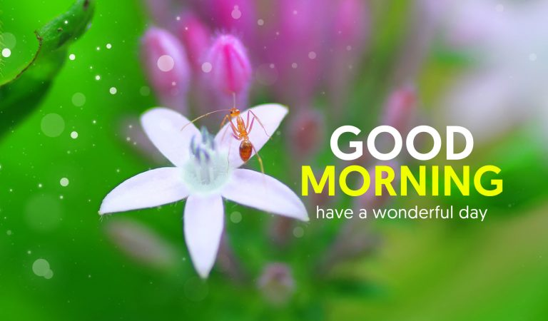 50+ Good Morning Status Video for WhatsApp Download in HD